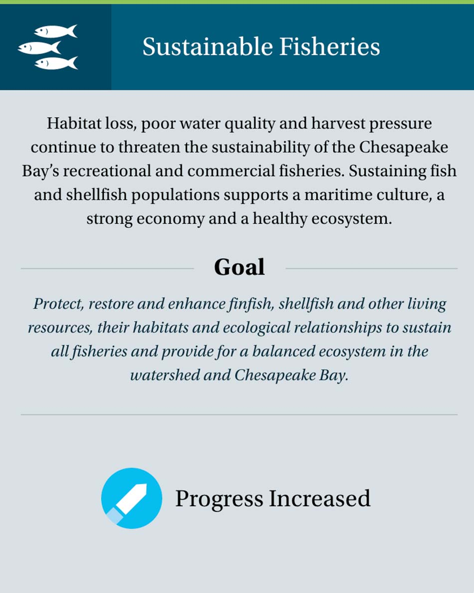 Chesapeake Progress website